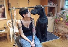 salon dla psów i kotów - PSUBRATEK & SEJUTEK zdjęcie 10