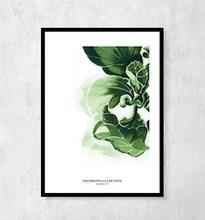 Plakat botaniczny Sałata