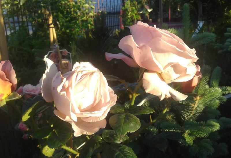 kwiaty, centrum ogrodnicze petra